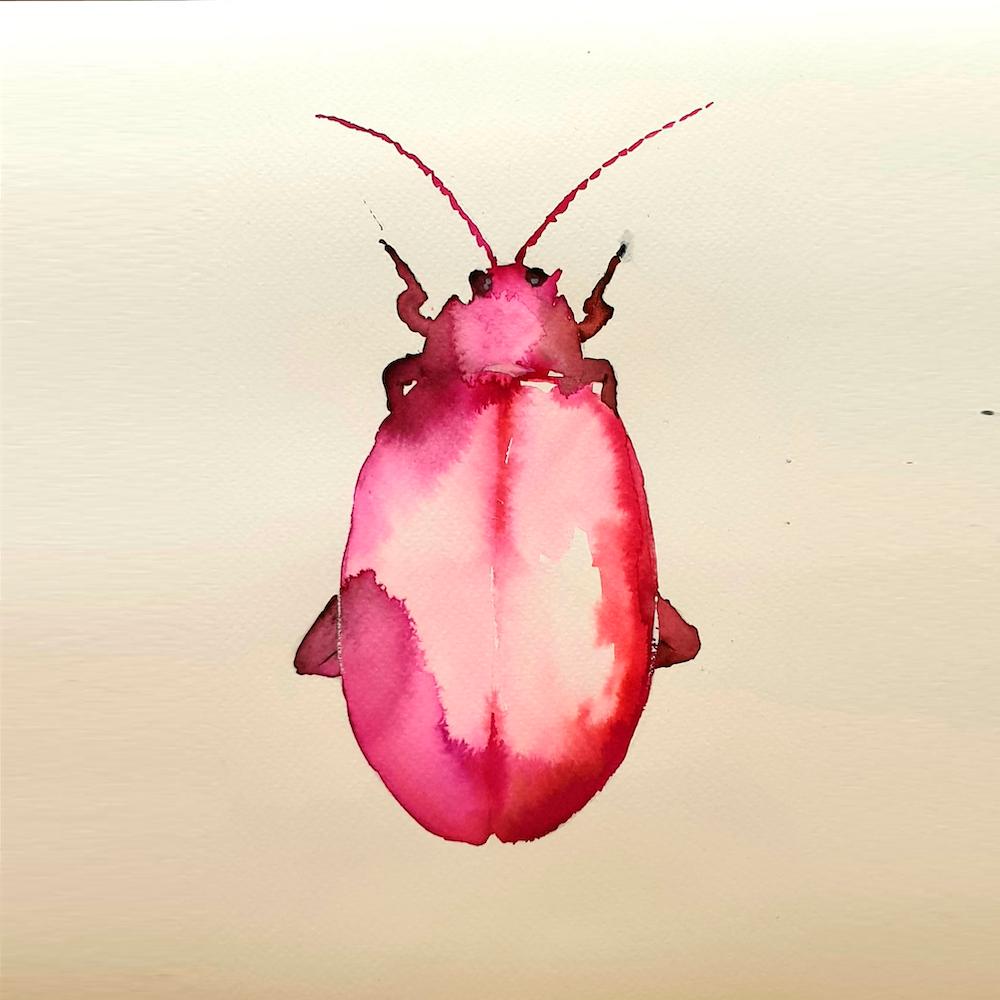 Acuarela Escarabajo Ana Soler Fernández